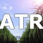 Valor do ATR - pré-maturadores
