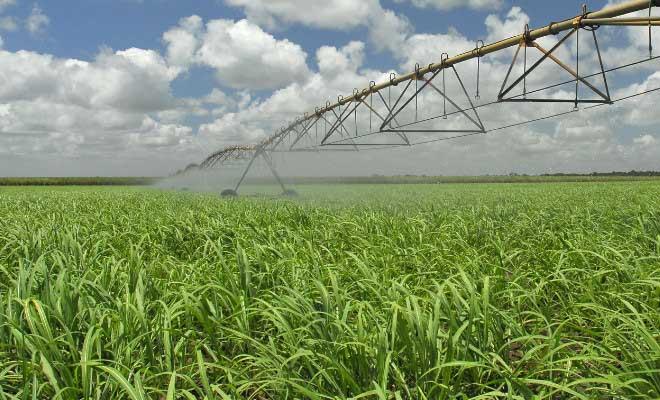 Mitos sobre irrigação na cana-de-açúcar