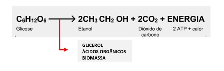 A equação acima de transformação de glicose a etanol e gás carbônico, sem levar em conta a produção de mais células e de subprodutos é chamada equação de Gay-Lussac.