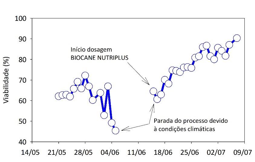 Gráfico 3. Recuperação do fermento utilizando BIOCANE NUTRIPLUS após interrupção da moagem devido às chuvas
