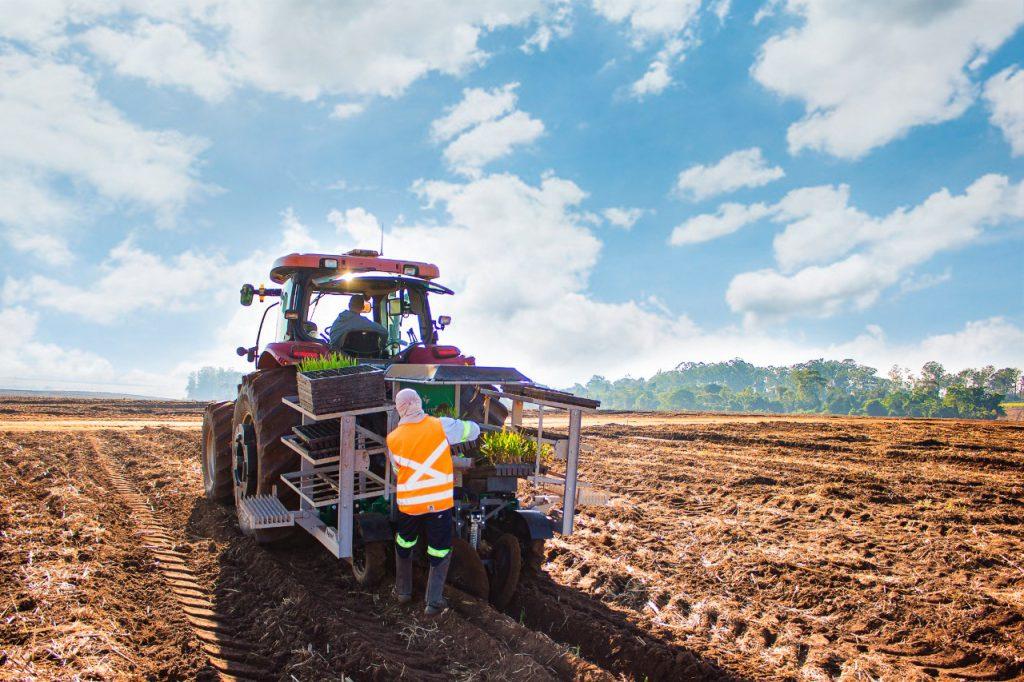 Os plantios de MPB se concentram a partir de julho até novembro