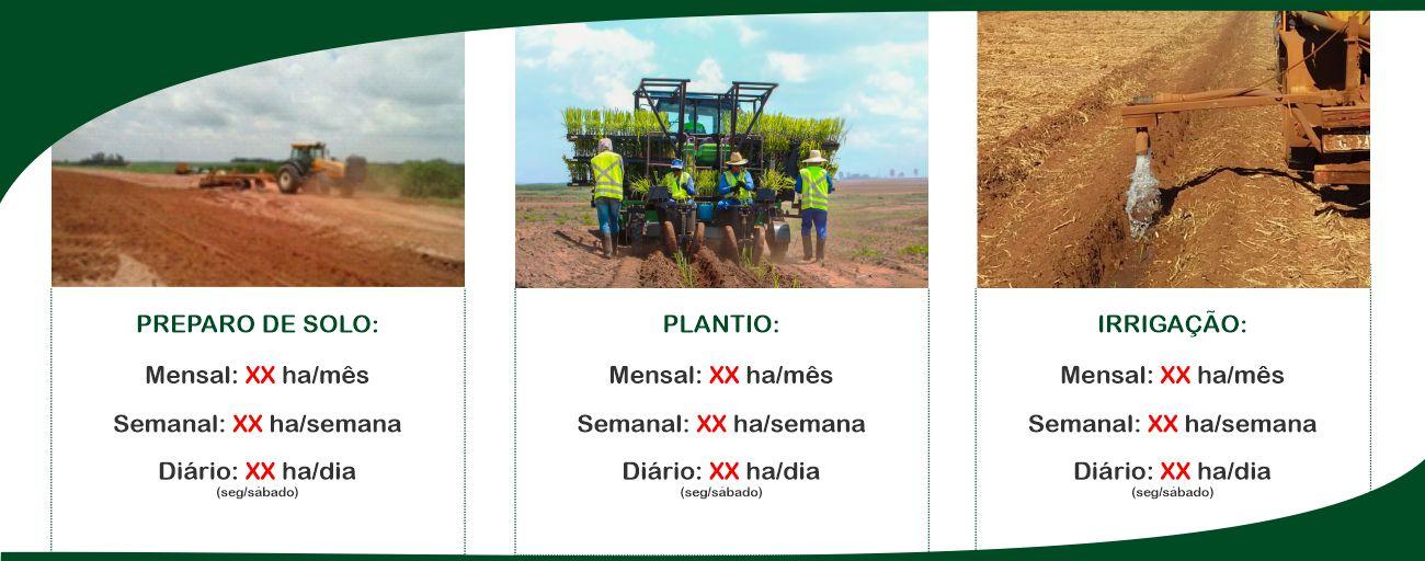 Mudas pré brotadas: preparo, plantio e irrigação