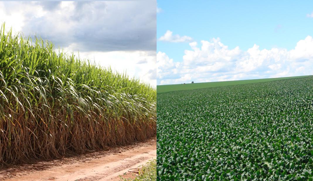 Os preços da soja, que estão quebrando recordes há meses no país, deverão incentivar o avanço do cultivo do grão sobre áreas de cana-de-açúcar