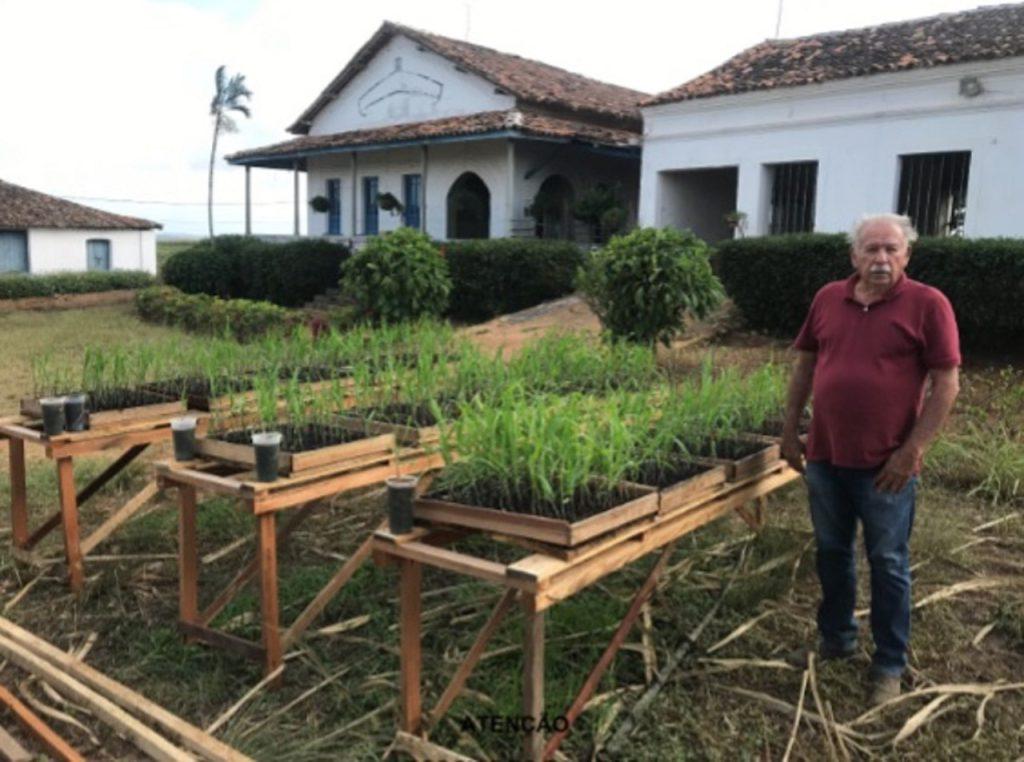 Dono de engenho pernambucano de cana desenvolve modelo mais barato e viável para produção de Mudas Pré-Brotadas (MPB)