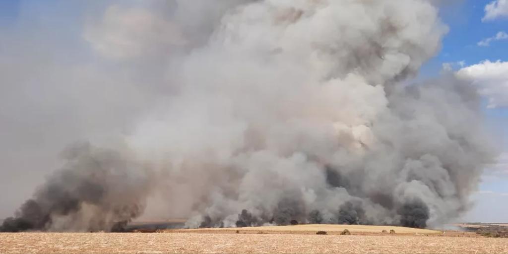 Incêndio atinge área de pastagem e lavoura de cana em Uberlândia